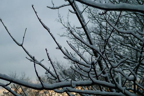 usa snow tree boston sunrise bos 20070205usa