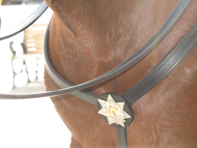 San Jose police horse badge