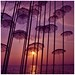 Sunshowers by ~Lily_Sandrita~