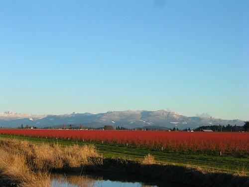 Skagit Valley Farm view | by brewbooks