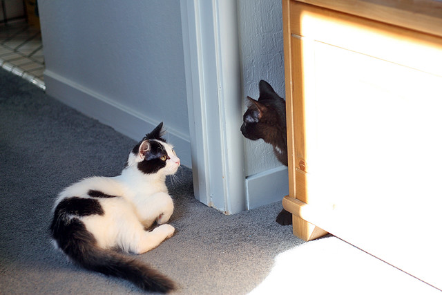 Marky and his brother first meeting