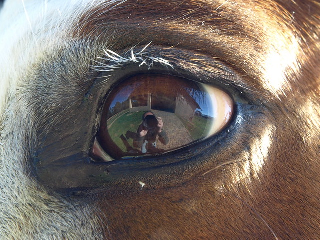 The eye of an horse - mirroring the world