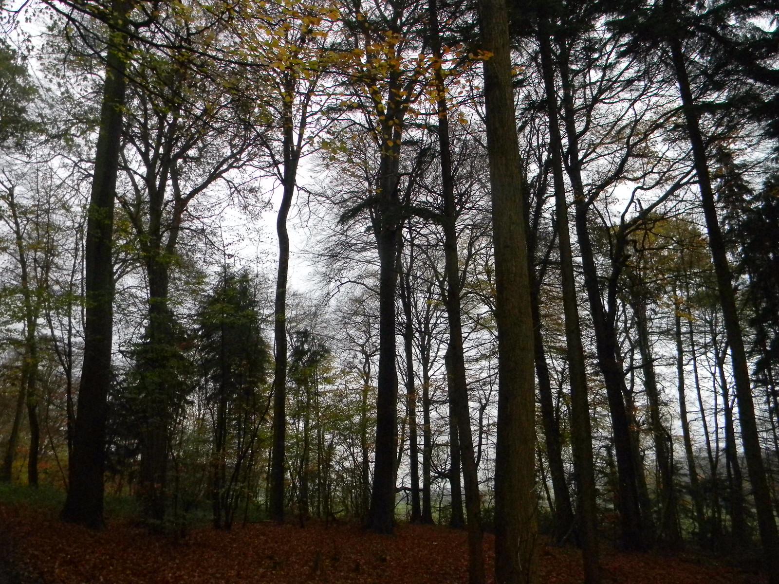 Trees Wendover Circular