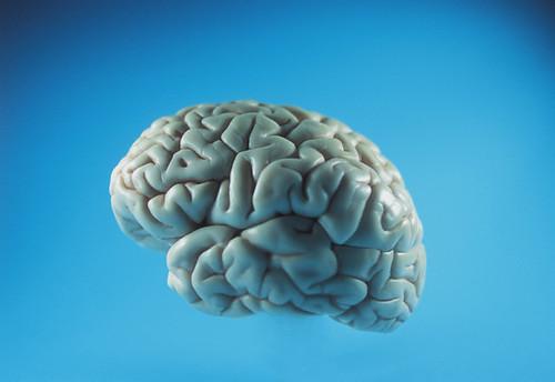 Brain | by Aban Nesta