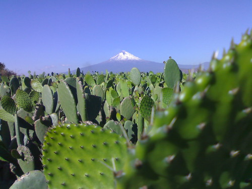 Popocatépetl y Nopales - Puebla