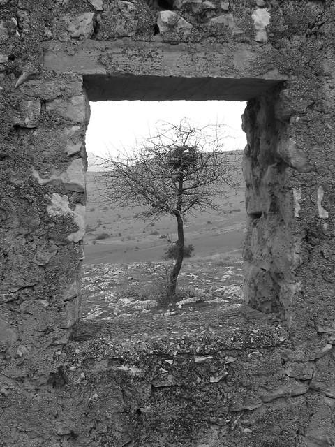 window around a tree