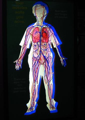 circulatory system | derek*b | Flickr
