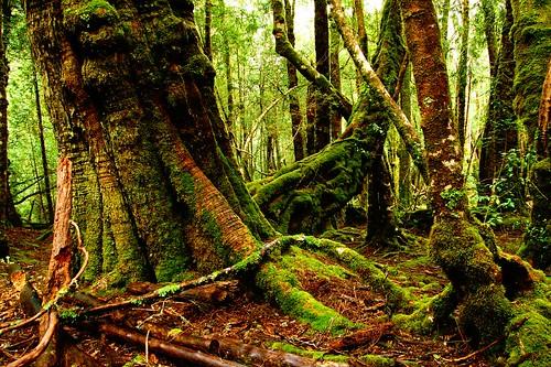 run forest, run! | by mugley
