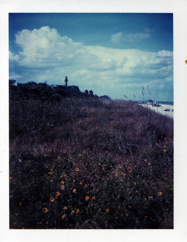 flowers plants cloud polaroid florida oil shrub bp spill sanibel ftmyers nighthouse iduv