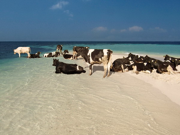 MaldivianSeaCows, Photoshop Contest Group, week 121