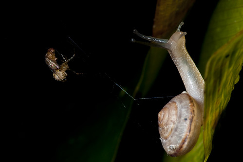 Stuck snail, running spider and entangled fruit fly 2   by Little Fat Monkey