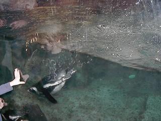 Georgia Aquarium | by k.mankiller