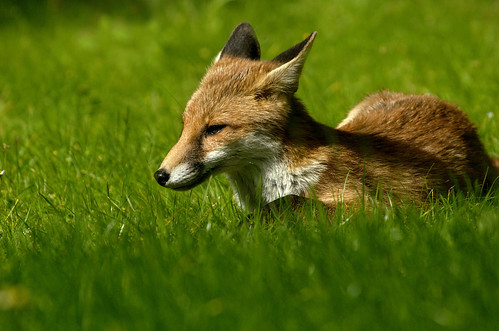 Chilling in the grass