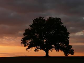 my tree at dusk | by joiseyshowaa
