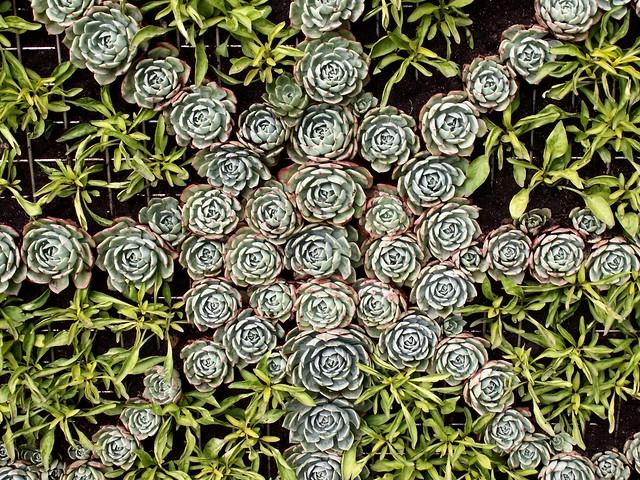 wheel of succulents