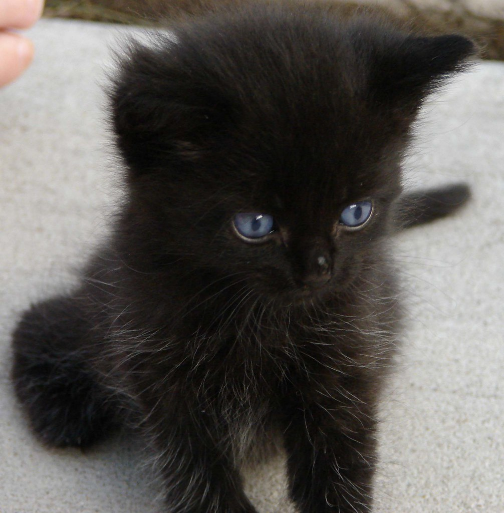 Black Kitten Weird Aunt Martha Flickr