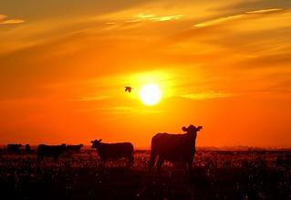Cuidando o campo   by Eduardo Amorim