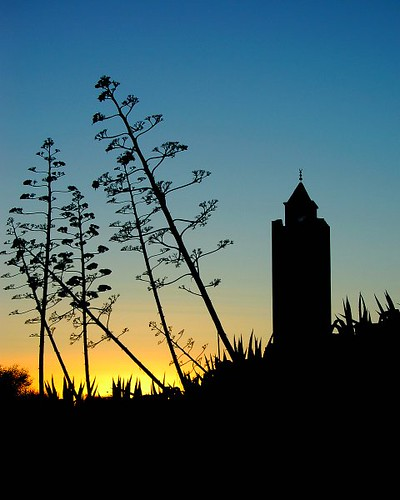 tunisia sidibousaid sunset silhouette mosque flower floral evening mediterranean architecture africa minaret muslimculture d50 nikon arabworld northernafrica northafrica tuniz explore beautiful fv10