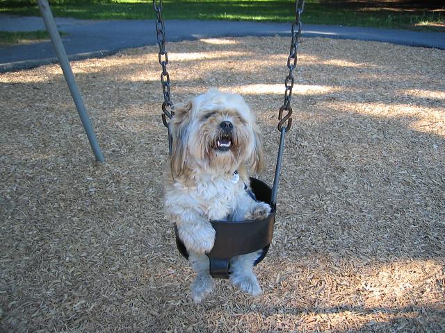 Buddy my Dog