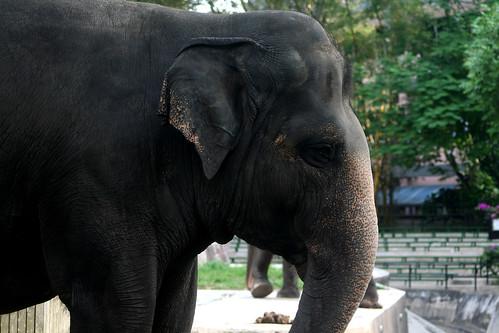 Elephant   by Phalinn Ooi