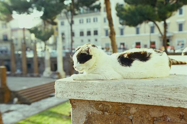 Resultado de imagem para cats in rome