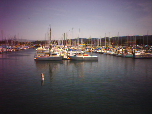 A Monterey View