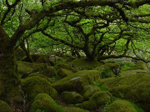 Witsman's Wood