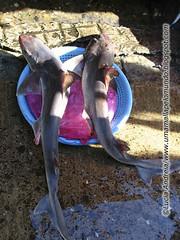 tubaroes no mercado de busan