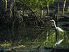Kota Kinabalu City Bird Sanctuary, Sabah