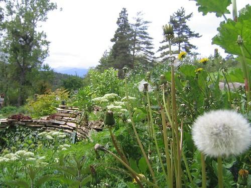 mens_terre_vivante_jardin