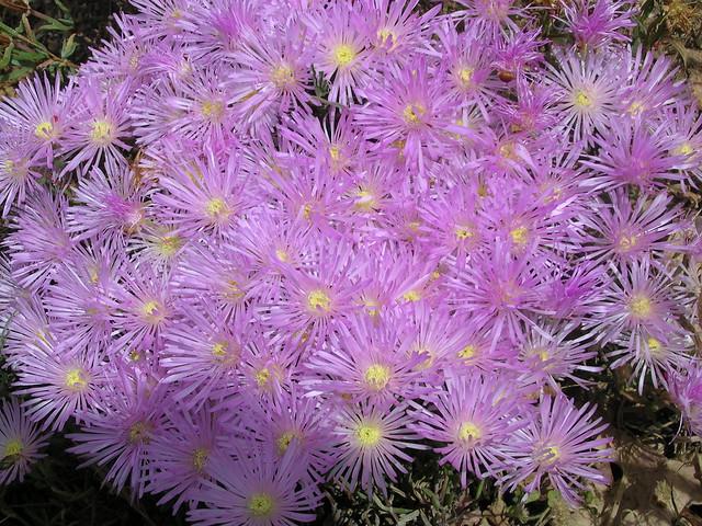 flower part 2
