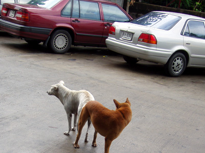 Fuggin Dogz