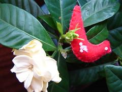 Olha o pássaro na flor