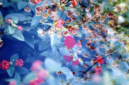 Cherry blossom & Lantana