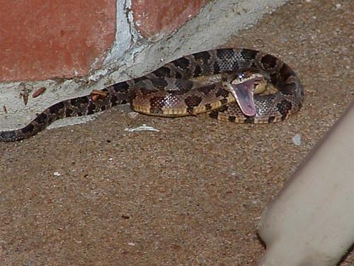 Mean snake