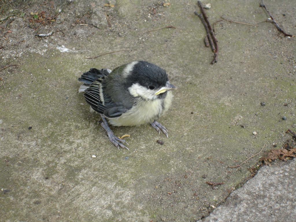 Brockley Bird