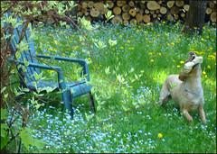 Chanelle-dans-la-pelouse