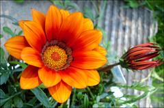 Orange-macro