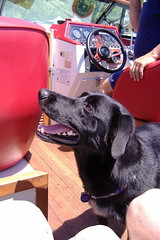 dognamedcooper01