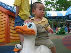 on Duck