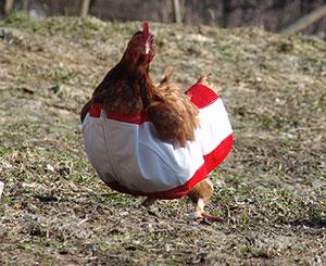 2005奧地利雞裝