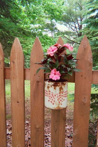 cannedplant