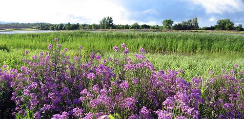 springtime comes to a prairie pond