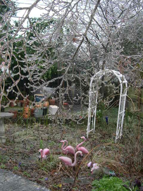 Icy garden, Columbia South Carolina