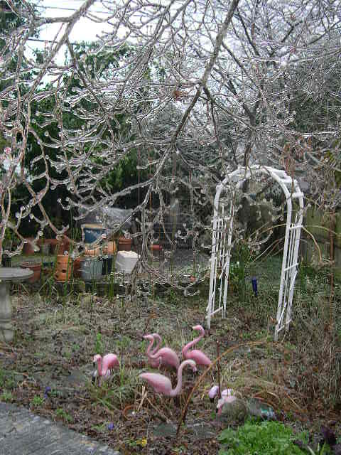 Icy garden, Columbia South Carolina