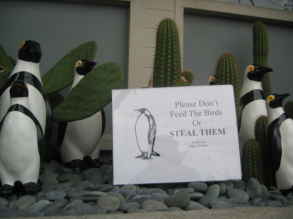 Penguins among the cacti.