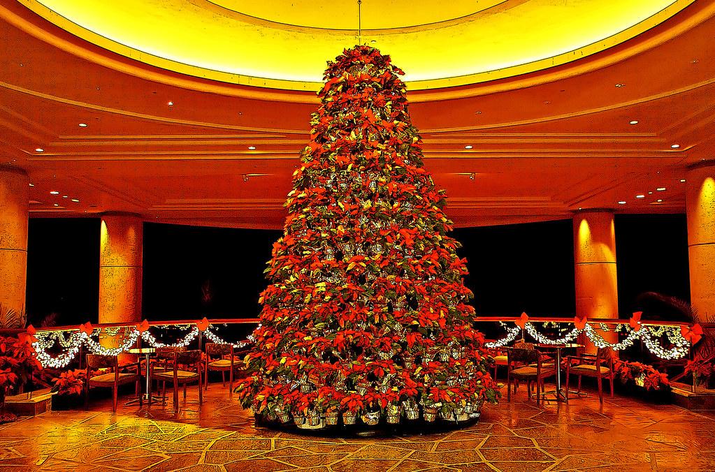 Christmas Tree Bill.Poinsettia Christmas Tree Merry Christmas In Your Langua