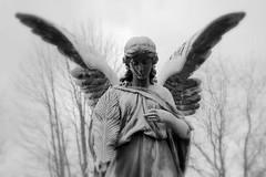 Lonely Angel | by bogenfreund