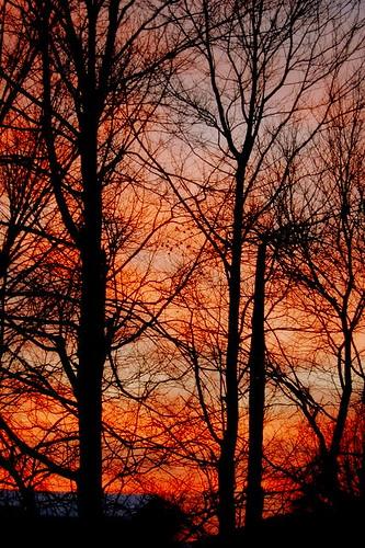 trees winter sunset backyard nikond40