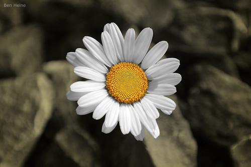 There is a Sun in Every Flower | by Ben Heine
